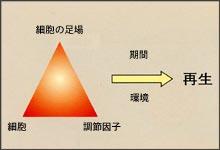 ティッシュエンジニアリングの3要素の画像
