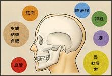 ロ腔・顔面領域で研究が行われているティッシュエンジニアリング組織