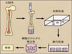 培養骨の作り方の画像